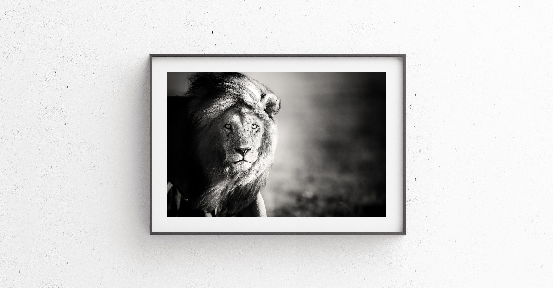 JAS_TBCP_fine_art_prints_hero_lion